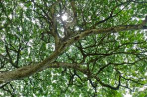 Meditação Ecológica: a Natureza, Deus e a Vida